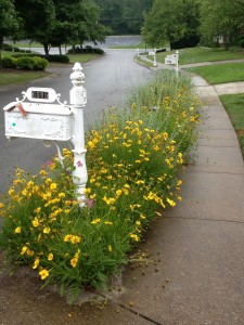 Here's what the mail carrier sees on a rainy spring day